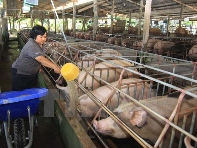 animal husbandry department tag vietnam breaking news