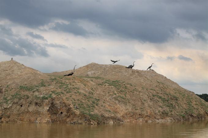 Rare birds, tourists flock to Tràm Chim Park