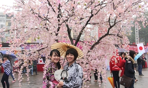 Cherry blossom events come to VN