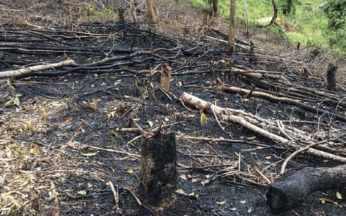 Forests destroyed in Điện Biên
