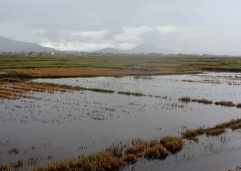 Saline fields leave Quảng Bình farmers worried