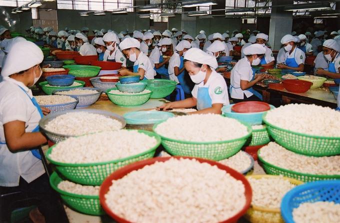Cashew exports edge down