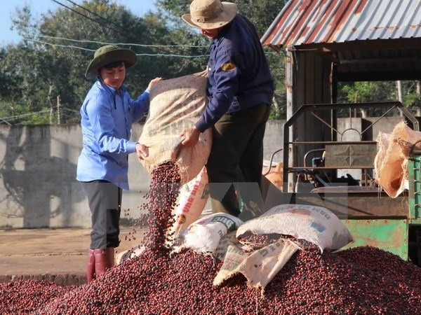 10 countries agree to protect Đắk Lắk coffee brand