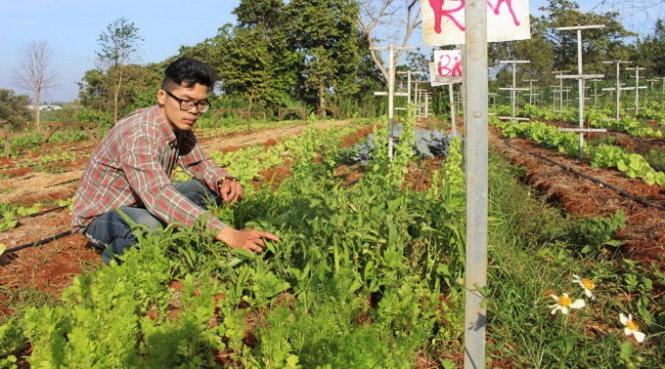 VN garden has Israeli roots