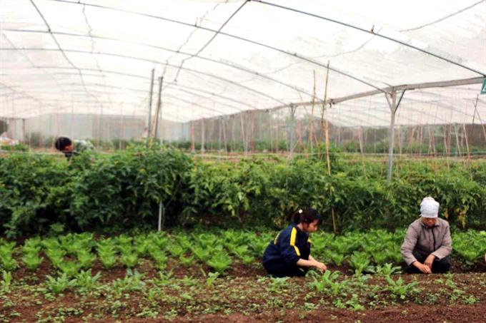 VN needs legal framework for organic farms