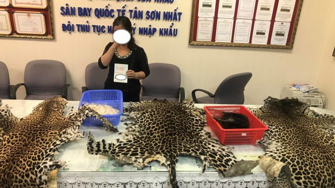 Elephant tusks leopard skins smuggled from Africa seized at airport