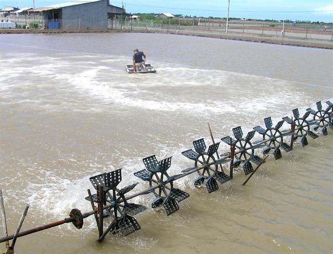 Shrimp aids climate change fight