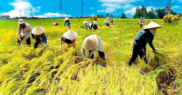 Lộc Trời Group listed on UPCoM