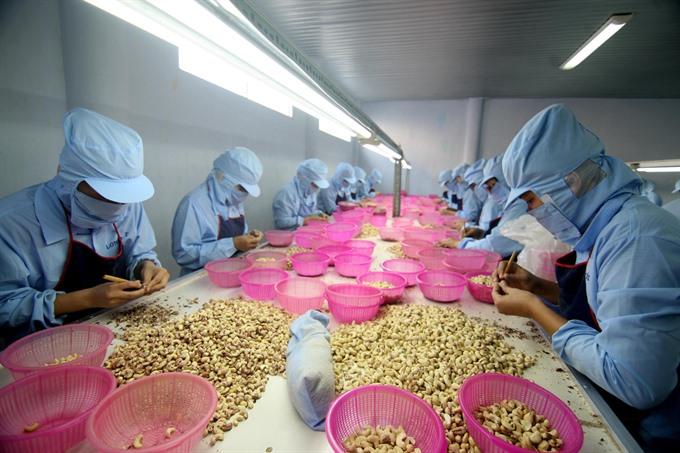 Customs hurdles for cashew