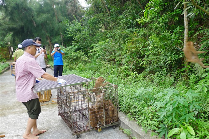 68 wild animals released in national park