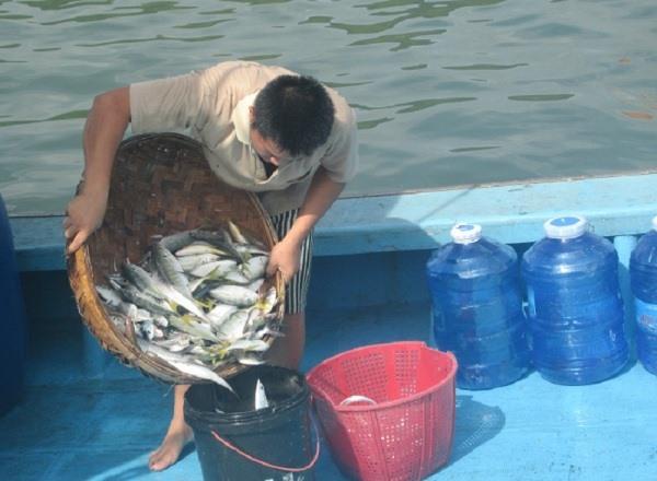 Nha Trang fishermen struggling