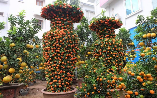 Fruit worth its weight in gold