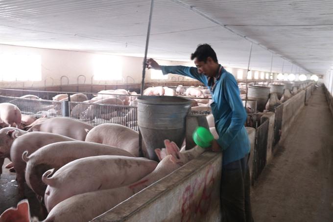 Bà Rịa–Vũng Tàu hi-tech animal farms excellent performance