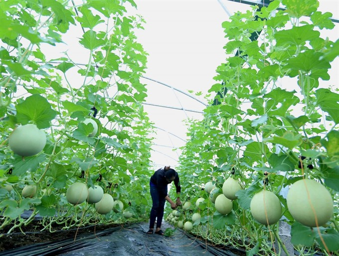 Cần Thơ agriculture revenues greatly outgrow yearly target