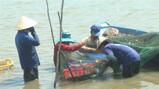 Đồng Tháp eyes over 2000ha of giant river prawn farming
