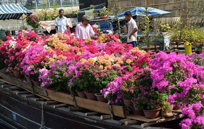 Flower growers hope to reap Tết rewards