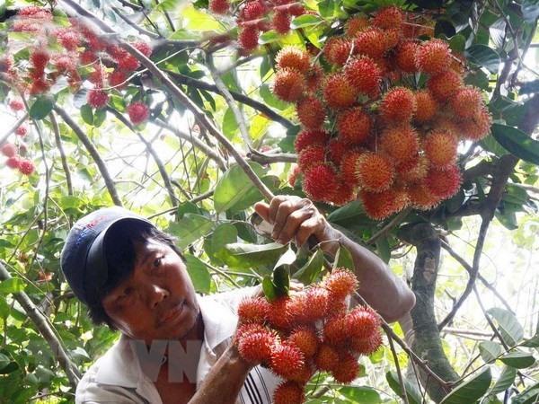 Export of Vietnamese rambutan to New Zealand announced