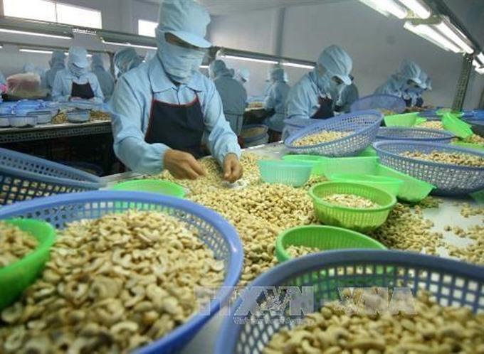 Bình Phước cashew GI certified aims to create national brand