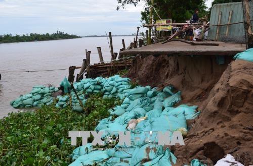 Đồng Tháp battles to prevent erosion along Tiền River