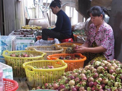 Bình Dương expands production of specialty mangosteens