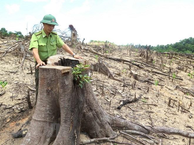 Court delays trial in deforestation case