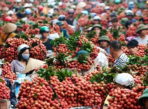 Hà Nam to witness high-tech agricultural products