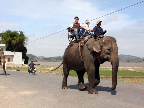 Yok Đôn National Park ends elephant riding