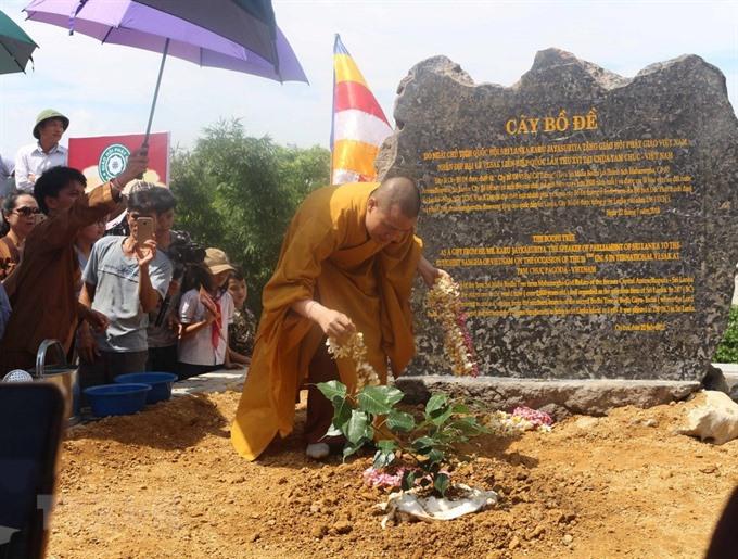 Sri Lankas Bodhi tree planted at Tam Chúc Pagoda