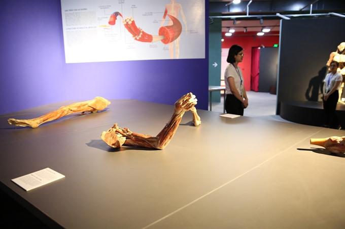 Human body exhibit spurs outcry