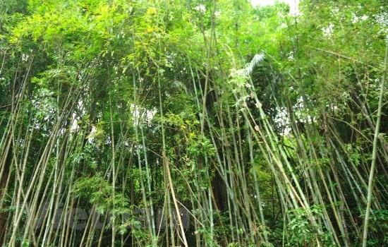 145ha of forest land returned to national park