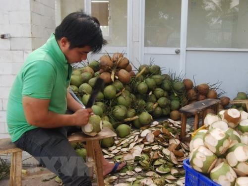 Trà Vinh promotes farming of key crops
