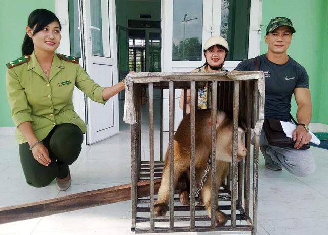 Huế saves a rare pig-tailed macaque