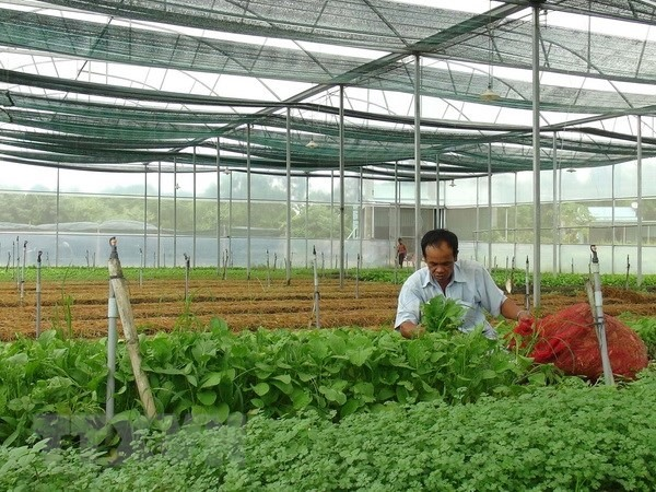 Việt Nam targets to attract 100,000 businesses in agriculture