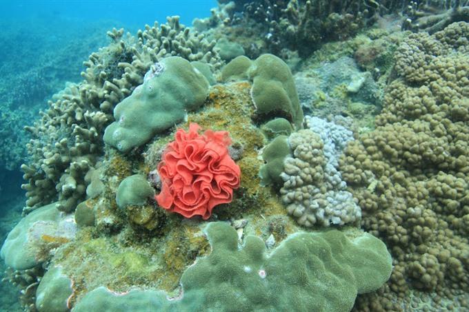 Coral reefs restored off Chàm Island