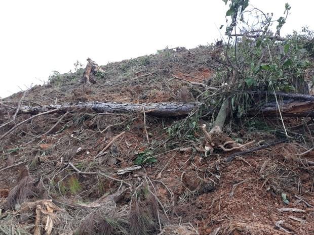 Đắk Nông police arrest five for poisoning pine trees