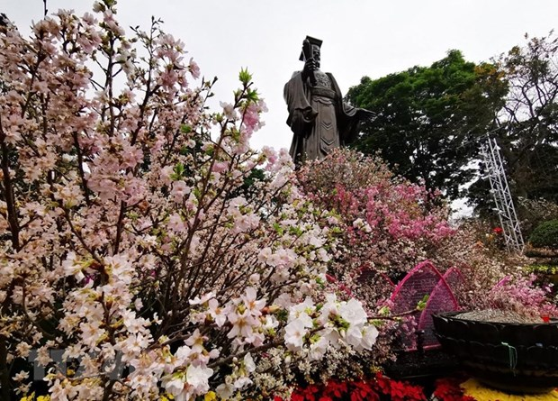 Japanese cherry blossom festival to be held in Hà Nội