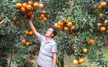A juicy treat for orange lovers