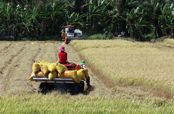 Mekong Delta enjoys good start to rice harvest
