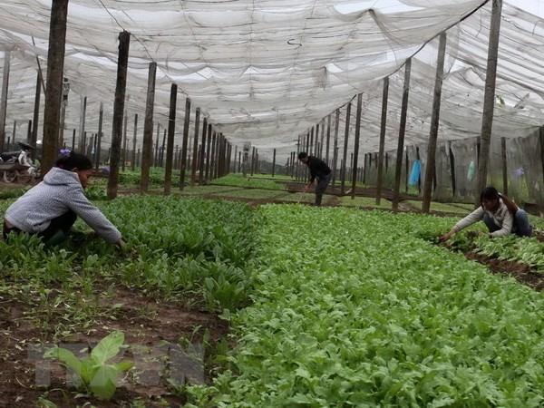 Hà Nội wants Asia Foundation to help boost urban agriculture