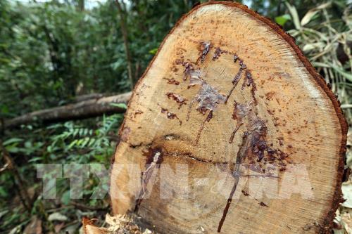 Poachers under investigation into national parks deforestation
