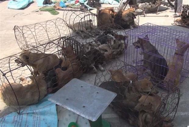 Thanh Hoá dog-theft ring under investigation