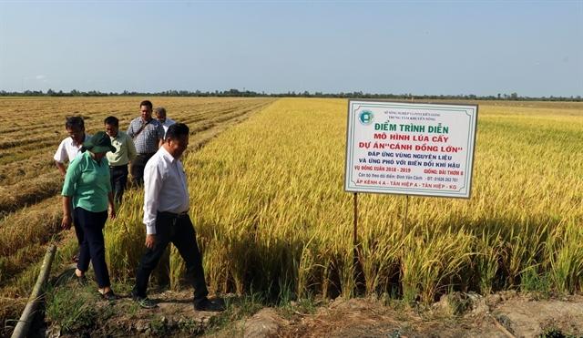 Kiên Giang increases rice output