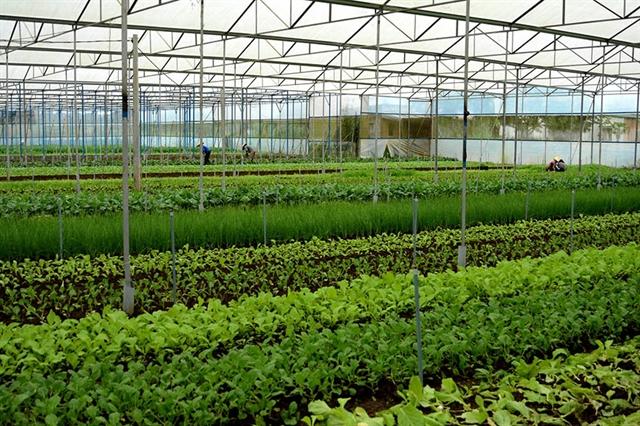 Bà Rịa-Vũng Tàu Province applies high-tech agriculture to improve quality yield