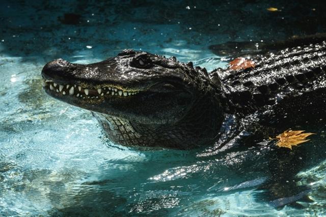 Worlds oldest captive alligator marks 83 years in Belgrade zoo