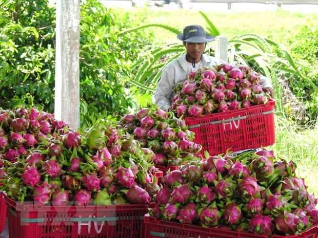 Bình Thuận dragon fruit expected to get protected status in Japan