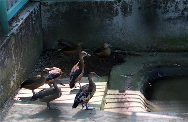 Wildlife Rescue Centrethe second home of animals