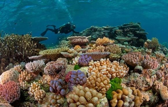 Con Dao island corals bleached by El Nino