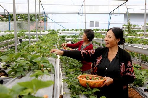 World Bank: VN needs agro reform