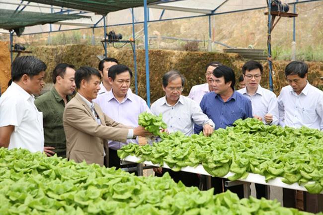 Intl farming support key: official
