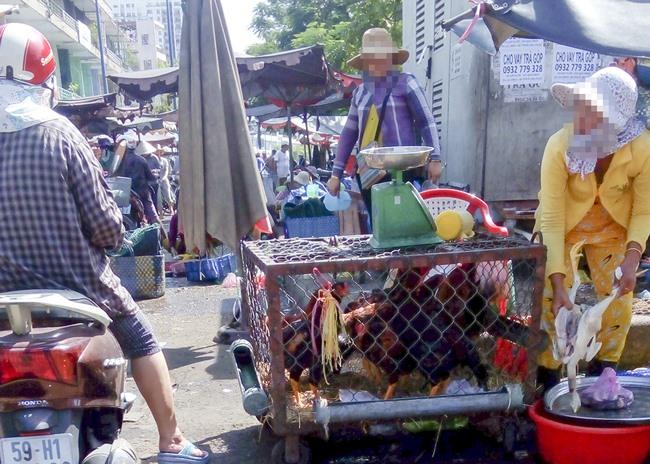 City on alert against bird flu outbreaks